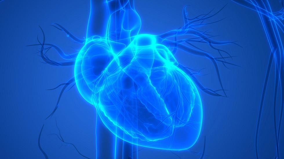 Ученые напечатали на 3D-принтере человеческое сердце