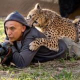Международный фотоконкурс дикой природы. Победил россиянин с амурским тигром + другие фотографии участников