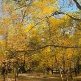 10 осенних обоев для iPhone — золотая осень в России