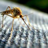 Почему комары так любят кровь? Почему одних кусают часто, а других – нет?