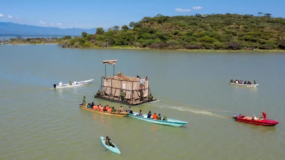 В Кении спасают жирафов. На плоту перевозят этих редких животных с острова на материк
