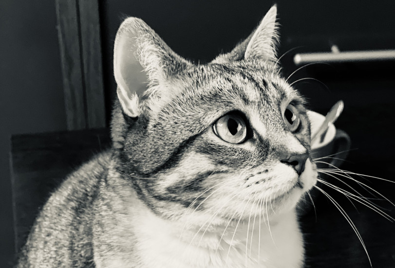 кошка чб